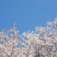 PAK86_sakurasoraharu14095539500